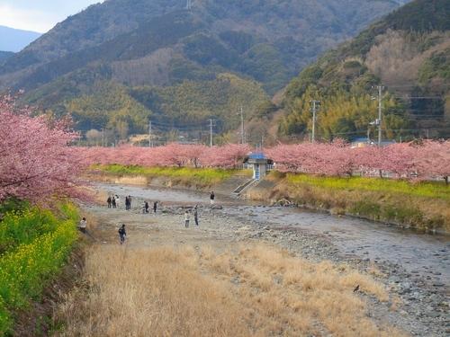 両岸は桜満開!