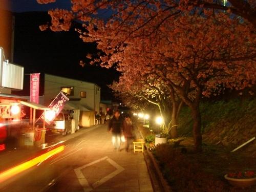 河津駅前のライトアップ夜桜