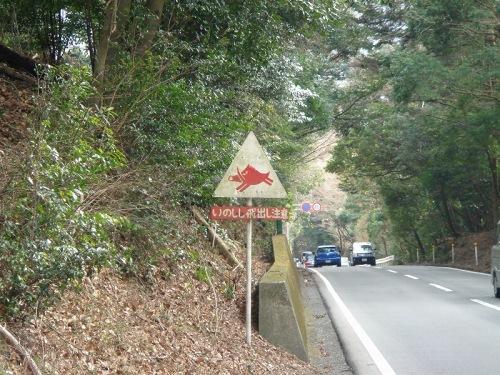 国道414号はイノシシ注意!?